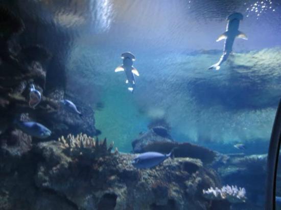 The Piranha Tank Picture Of Shark Reef Las Vegas