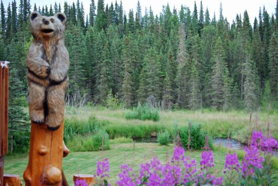 Crooked Creek Retreat & Outfitters : View of the back yard at Crooked Creek Retreat