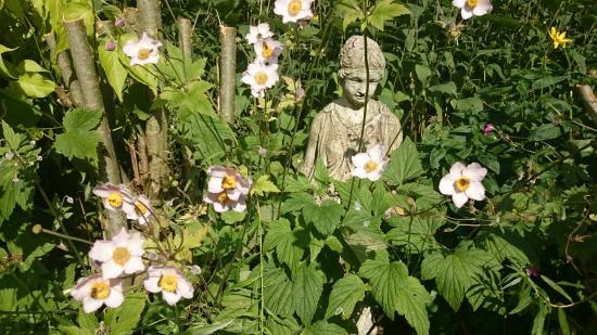 Clashacrow gardens