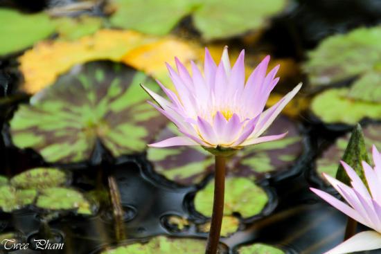 Love Lotus Flower Picture Of Mercer Arboretum Botanic Gardens