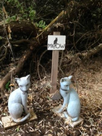 Cleo's Ferry Museum and Nature Trail: Cleo's cats