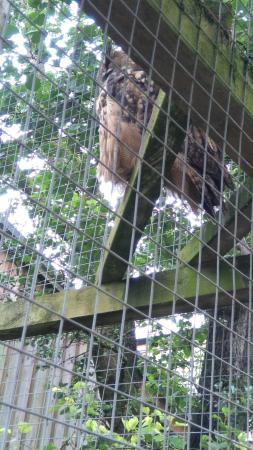 Bowland Wild Boar Park: 31/08/2015