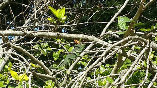 Botanical Garden San Fernando