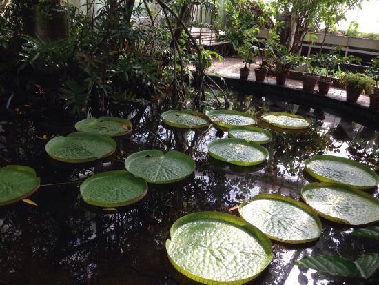 Botanical Gardens (Botanisk Have): photo0.jpg