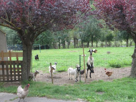 Hotel du Val d'Aure: Goats and hens!