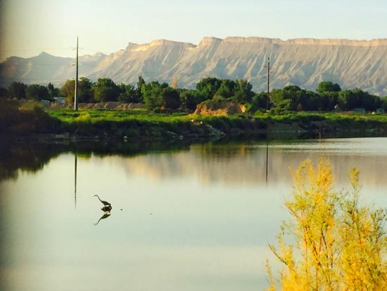 Grand Junction, CO: A Heron sitting on a stump, fishing, on a small lake near Corn Lake