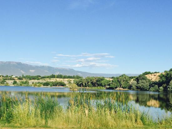 Grand Junction, CO: The wetlands and Cattails
