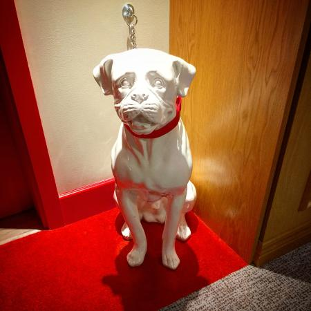 Dog In Front Of My Dog Friendly Room Picture Of Virgin Hotels