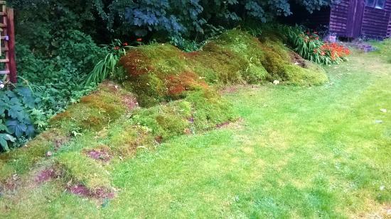 Rhydlewis, UK: Green Goddess