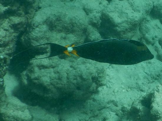 A variety of fish species picture of hanauma bay nature for Fish species hawaii