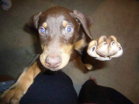 dog s paw brewing co picture of dog s paw elgin tripadvisor