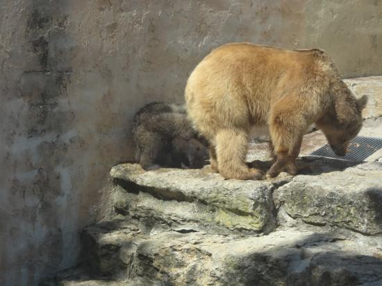 Jardim Zoologico: Mamãe ursa e seus filhotes