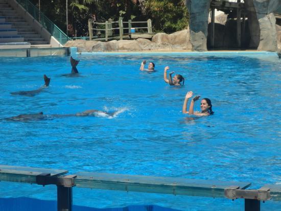 Jardim Zoologico: Show dos golfinhos