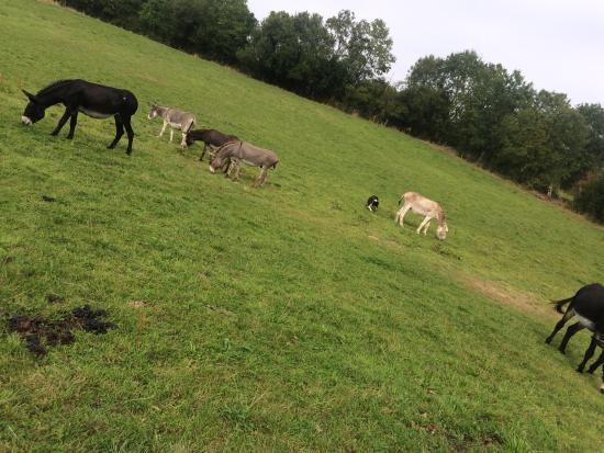 La Ferme des Anes : Le cadre, les ânes.