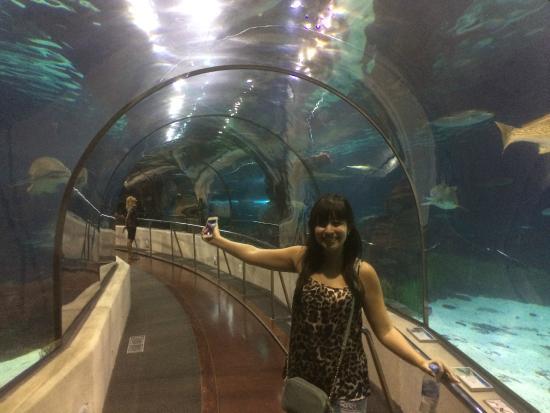 T nel principal dentro do l 39 aquarium picture of l for Aquarium de barcelona