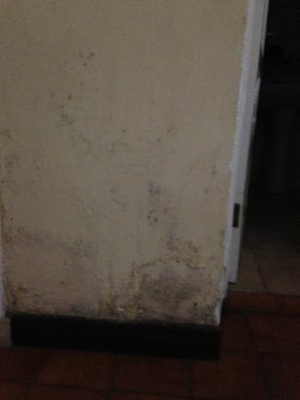 Hotel Plaza: filthy mouldy walls