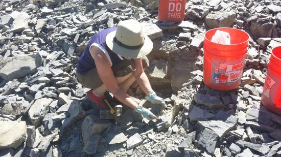 U-Dig Fossils: Digging for fossils