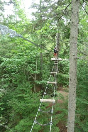 TreeGO - Moncton : Ladder Bridge