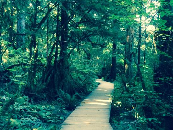 """Baden-Powell Trail: This is phenomenal! I can't believe how nicely laid out this trail is without losing the """"natura"""