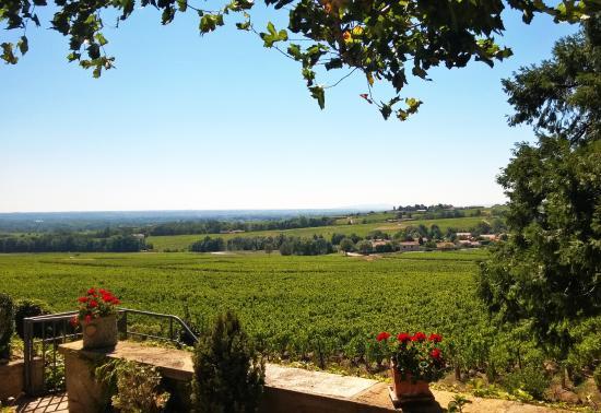 Chenas, Франция: Depuis la terrasse, vue sur le vignoble avec, tout au fond, le Moulin à Vent