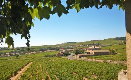 Chenas, Франция: Depuis la grande baie de la salle de restaurant, vue sur le vignoble et sur le village de Chénas