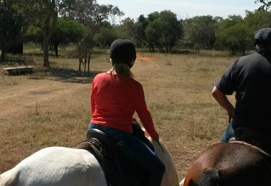 Brits, Afrique du Sud : Wildlife encountered includes Giraffe, Kudu, Honeybadger, Zebra, Blue Wildebeest to mention a fe