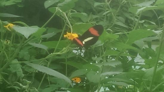 Butterflies in the Straffan Butterfly farm