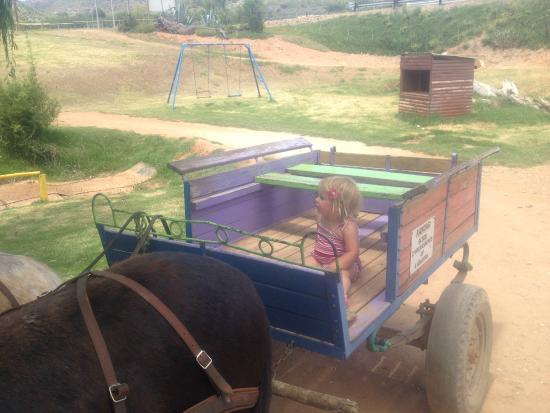 Wilgewandel Holiday Farm: Ride donkey cart