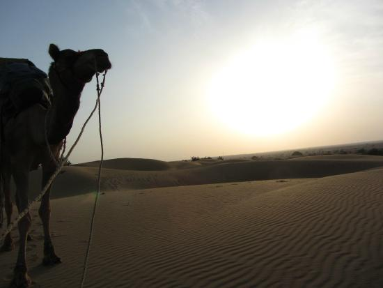 Adventure Travel Agency Camel Safari - Day Tours