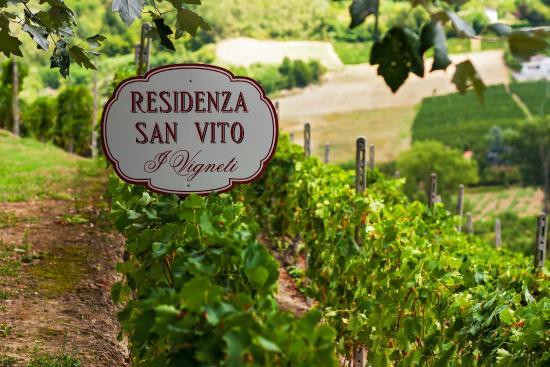Residenza San Vito: I vigneti