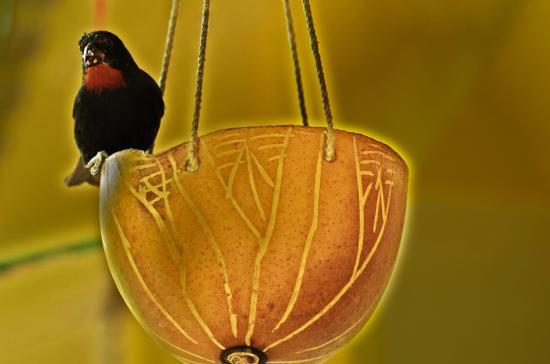 Au jardin des colibris deshaies arvostelut sek for Au jardin des colibris