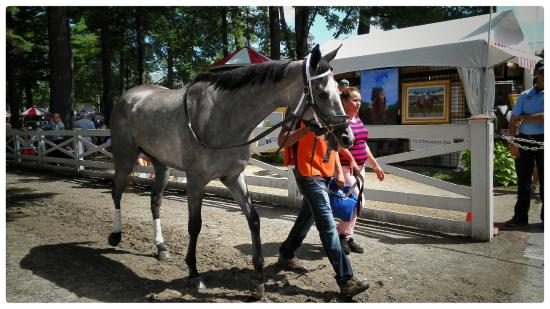 Saratoga Race Course: watch the beauty close up