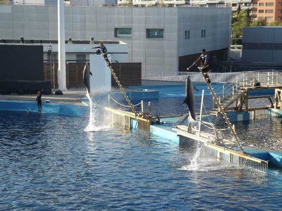 Oceanografic Valencia: oceanographic spectacle dauphins