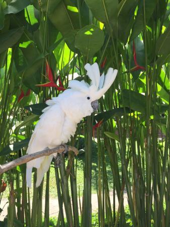 Gianyar, Endonezya: Kakatua