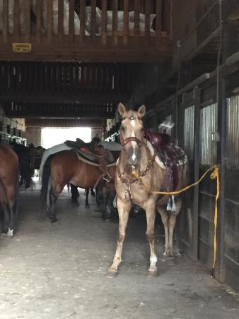 Echo Lake Stables