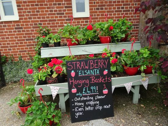 Hever Castle & Gardens: Plant Stall