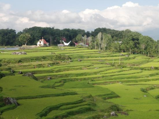 Sulawesi Culture and Nature Tour