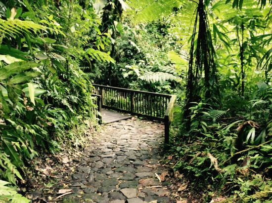 Carbet Falls (Les Chutes du Carbet): Chuut..Silence..