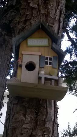 Casa Das Flores: Bird Café