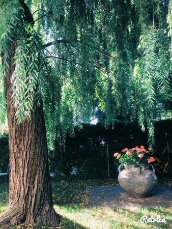Hotel Des Horlogers: the pretty garden