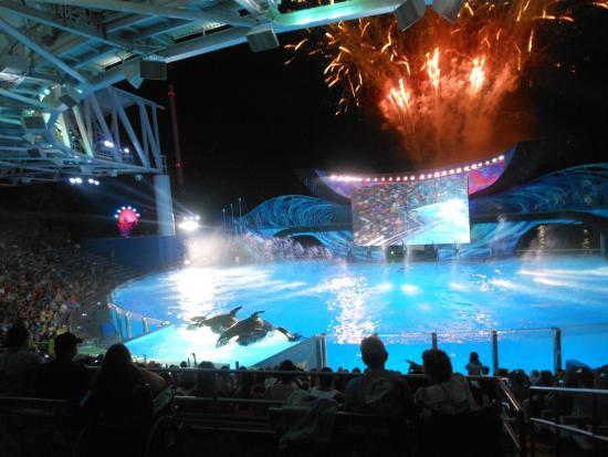 SeaWorld Orlando: Show da Shamu noturno
