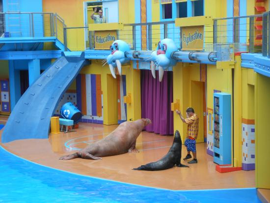 SeaWorld Orlando: Show do Leão Marinho