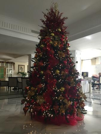 one of the most beautiful Christmas trees I have ever seen - Picture ...