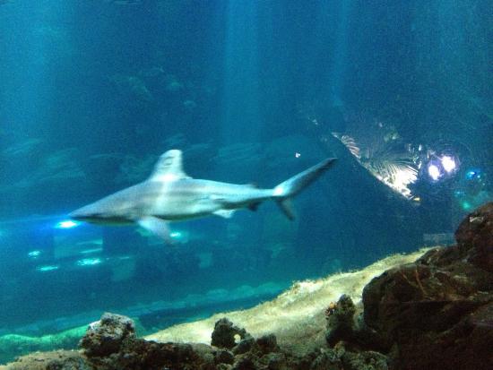 aquarium de cineaqua photo de aquarium de cineaqua tripadvisor