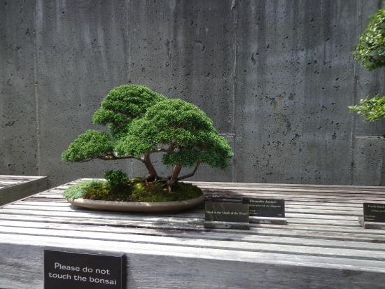 The North Carolina Arboretum: Bonsai at NC Arboretum