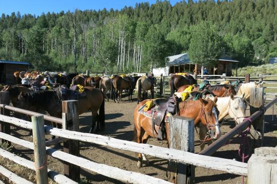 Rusty Spurr Ranch: Horse pens