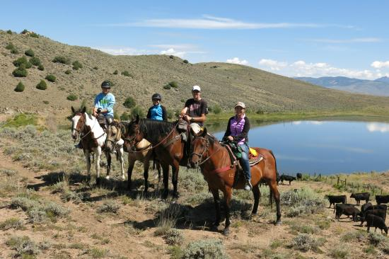 Rusty Spurr Ranch: The cattle by the water.