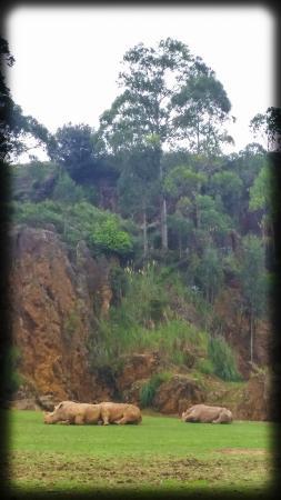 Parque de la Naturaleza de Cabarceno: Les espaces