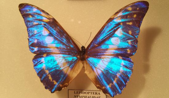 Musee des Papillons: Papillons