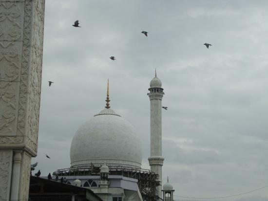 Hazratbal: Birds